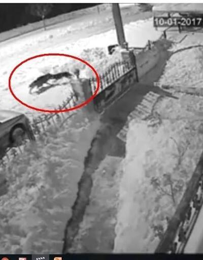Tokat'ta aç kalan kurt şehre indi, köpeği sürükleyerek götürdü