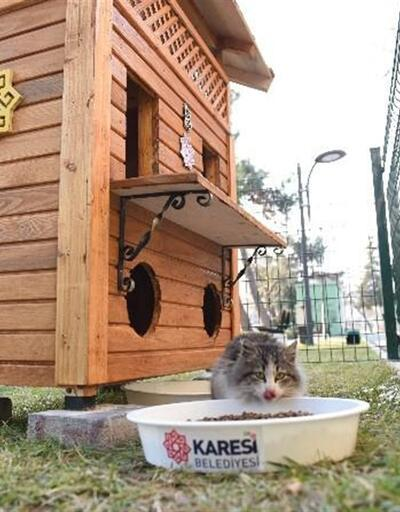 Balıkesir'de  sokak kedilerine dubleks ev