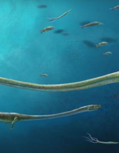 Bu fosil üreme hakkında bilinenleri alt üst edecek