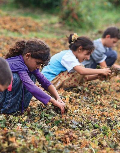 Kayıtlı çocuk işçi sayısı 400 binden fazla