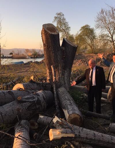 İznik Gölü kıyısında ağaç kesimine tepki