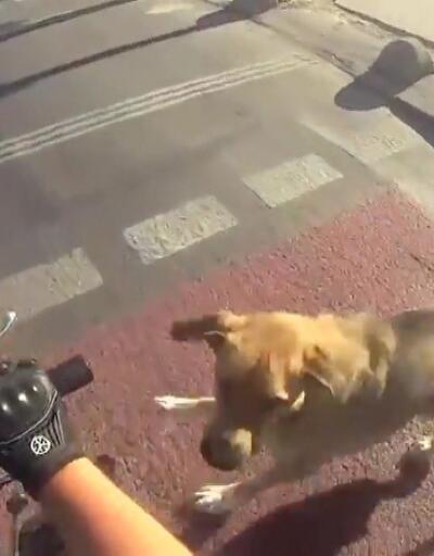 Motosikletli gencin köpekle imtihanı