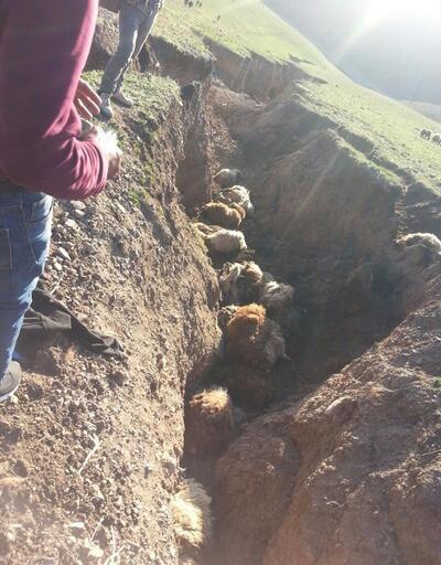 Ağrı'da sele kapılan 71 hayvan telef oldu