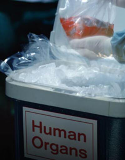 Türk Böbrek Vakfı'nı arayıp 'organ satmak istiyorum' diyorlar