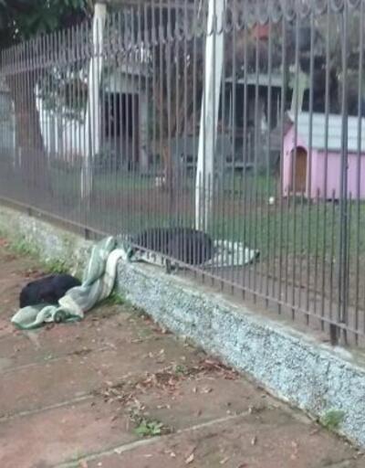 Sokak köpeği olmanın ne demek olduğunu unutmamış!