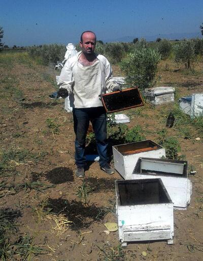 1 milyon arıyı böyle telef ettiler