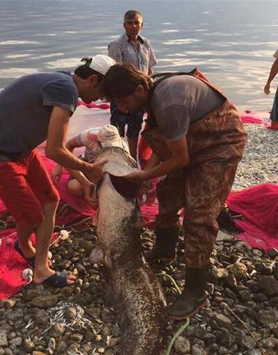 İznik Gölü'nde 1.70 metre boyunda yayın balığı yakalandı
