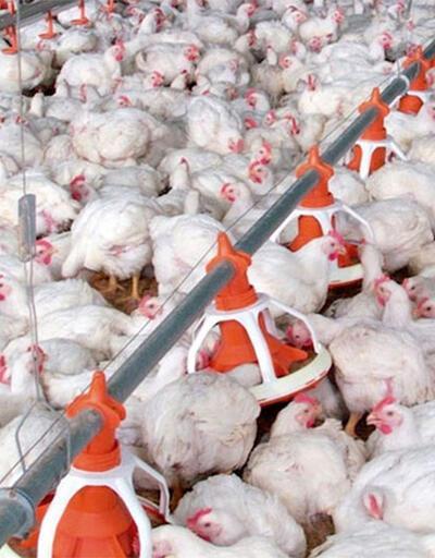 Sivas'ta kuş gribi alarmı