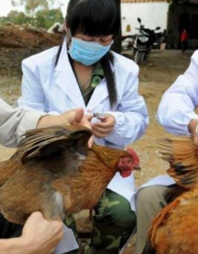 Filipinler'de kuş gribi alarmı! 400 bin hayvan itlaf edilecek