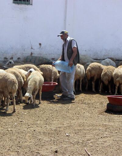Koyunları için bidonlarla 10 kilometreden su taşıyor