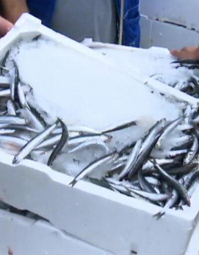 Balıkçılar sezona nasıl başladı?