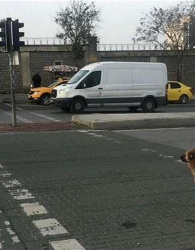 İnsanlar kırmızıda geçti, sokak köpeği yeşil ışığı bekledi!