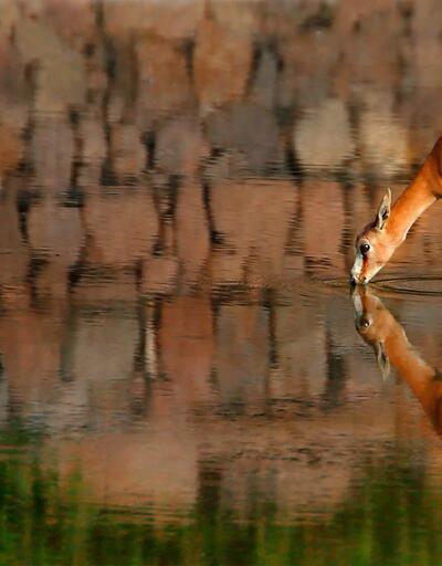 En güzel 'Doğal Yaşam' fotoğrafları belirlendi