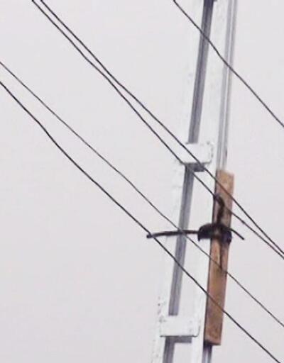 Elektrik hattı tehlikesine 'tahtalı' önlem