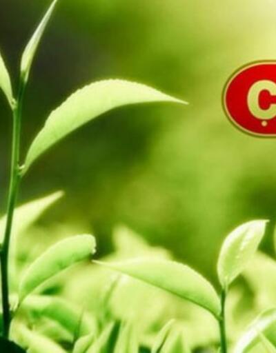 Çaykur'da mevsimlik işçilerin çalışma süreleri 120 günden 180 güne çıkartıldı