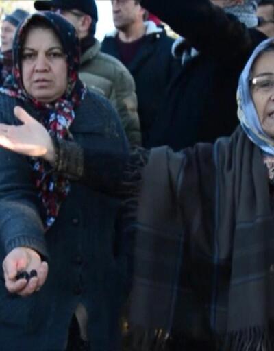 Amasra'da zeytin ağacı katliamı