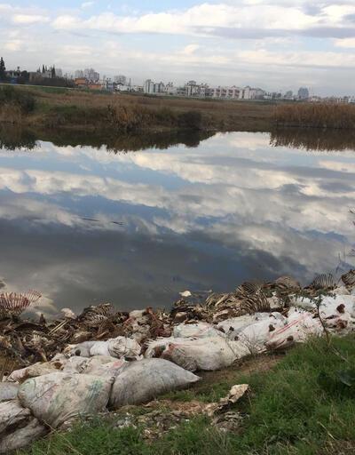 Adana'da ürküten görüntü