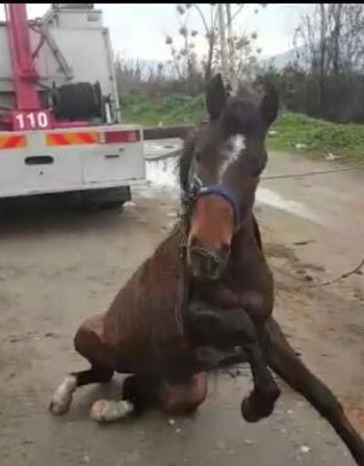 Sulama kanalına düşen at güçlükle kurtarıldı