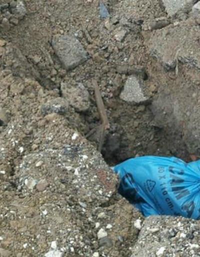Telef olan hayvanların poşete konularak gömülmesine büyük tepki