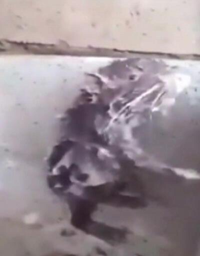 Bu fare insan gibi duş alıyor!
