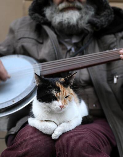 Reuters İstanbul'un sokak kedilerini fotoğrafladı