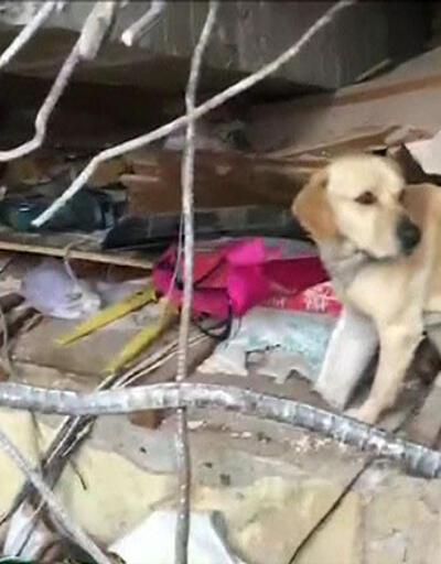 Dünya bu kahraman köpeği konuşuyor!