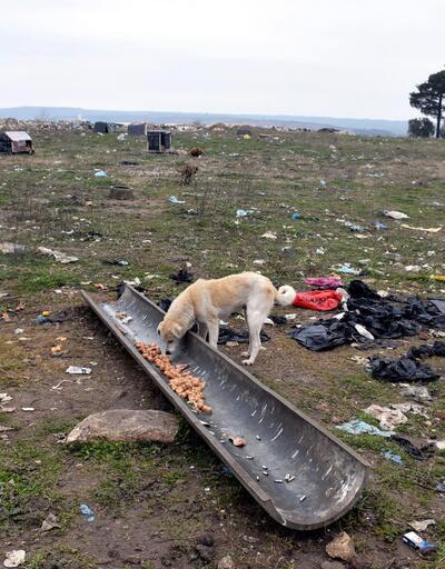 Edirne'de garip olay!500 köpeğin sırrı çözülemedi
