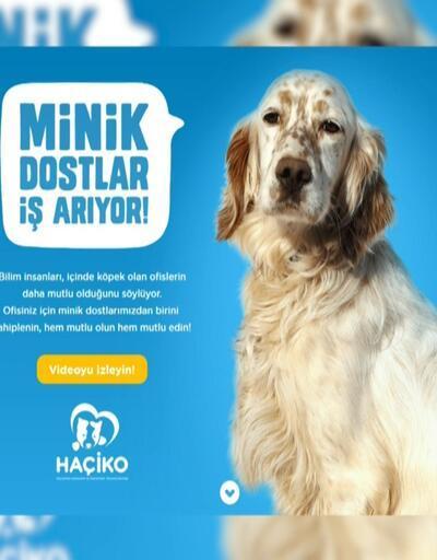 Ofis arayan köpeklere iş ilanı verildi