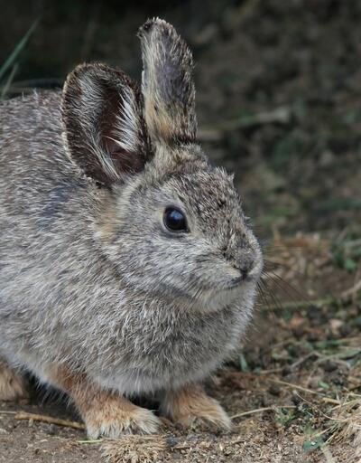 Gerçek olduğuna inanamayacağınız dünyanın en küçük 25 canlısı