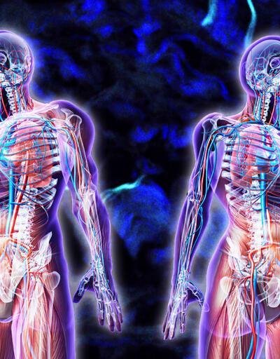 İnsan vücudunda yeni bir organ keşfedildi: Interstitiyum