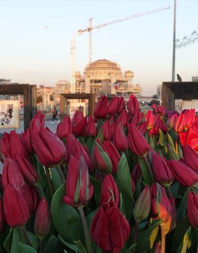 Taksim Meydanı'na 187 bin lale