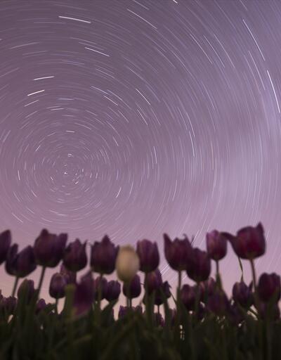 Lalelerin gece güzelliği
