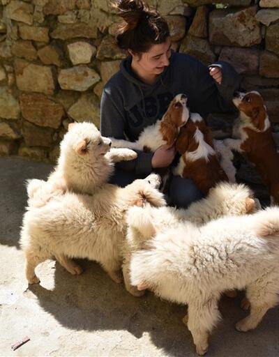 Gümrük kaçağı yavru köpekler ihale ile satılacak