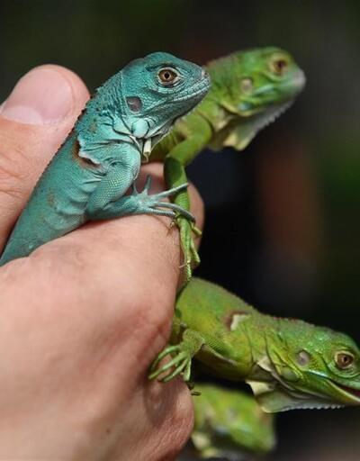 Bursa Hayvanat Bahçesi'nin sevimli yavruları dünyaya geldi