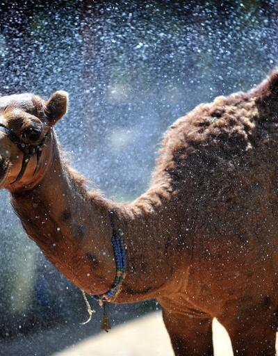 Hayvanlar, su ve buzlu yiyeceklerle serinletildi
