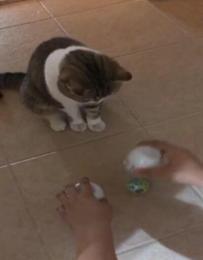 Kedinin dikkati görenleri şaşırttı