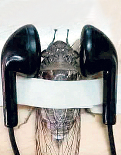Ağustos böceğine işkence yapan öğretmen