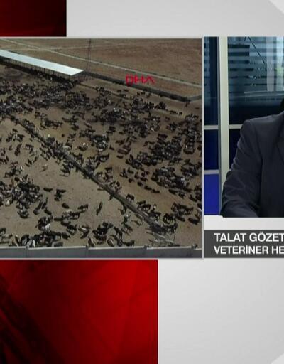 Talat Gözet'ten Ankara'daki şarbon alarmına dair açıklama