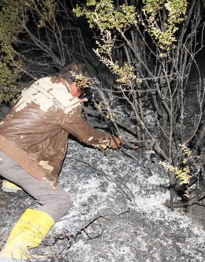 Ayvalık'ta yangın: Zeytin ağaçları zarar gördü