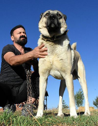 İtalya'nın 'Sivas Kangal' çağrısına Türkiye'den yanıt