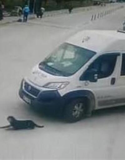 Köpeği ezen servis şoförüne Büyükşehir Belediyesi'nden ceza