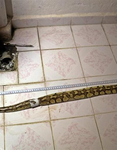 Aref'in arkadaşına 'yılan' cezası