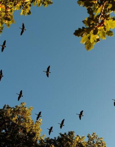Reuters objektiflerinden sonbahar manzaraları
