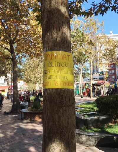 Ağaçta esrarengiz yazı