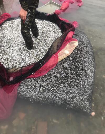 İznik Gölü'nde 40 yıl sonra gümüş balığı şaşkınlığı