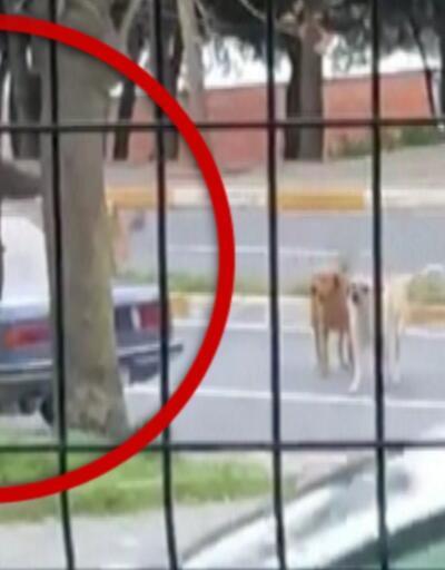 Sokak ortasında köpeklere ateş etti