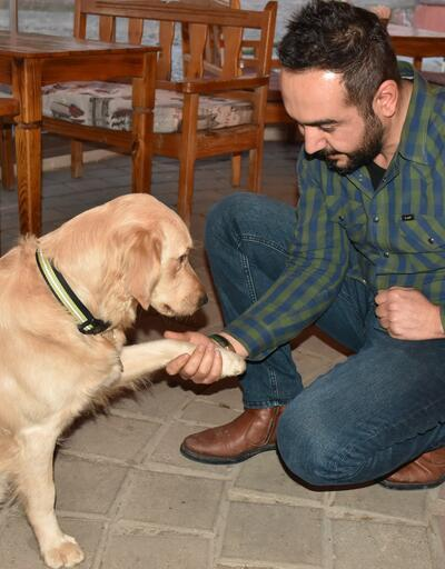 Kafe sahibi köpeği 'Bobo'yu kadına şiddet gösterenlere karşı eğitti