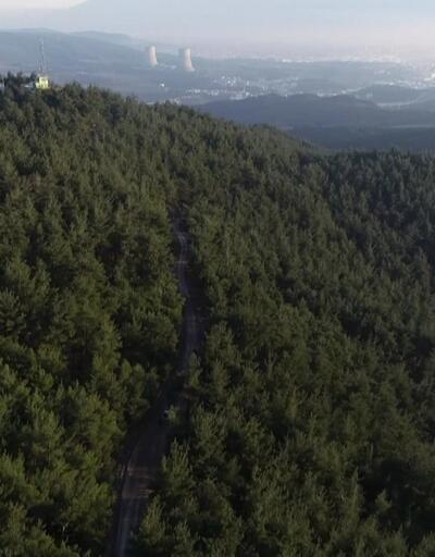 Çam ormanına 120 tiner tenekesi attılar
