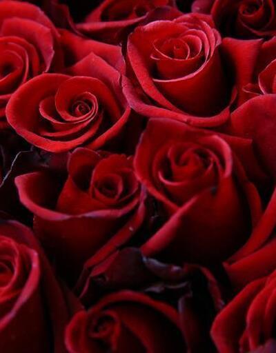 Çiçekçiler 14 Şubat Sevgililer Günü'ne hazırlanıyor