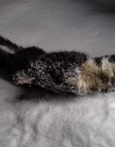 Hakkari'de sokak kedisi donarak öldü
